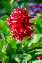 Beautiful Red Flower In Garden, Red Flower Pattern