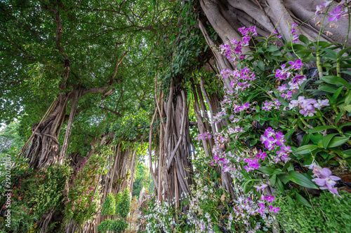 Photo Vertical banyan tree arrangements in the park.