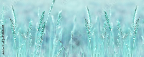 Fototapeta Wide panoramic natural background in pastel colors. Wild grass field panorama. Nature outdoors widescreen wallpapers obraz