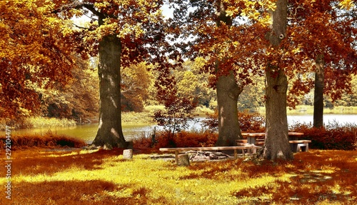 Fotobehang Rood paars Panorama of a gorgeous landscape in a scenic autumn forest during october with sunlight shining through