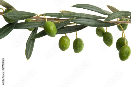 Fotobehang Olijfboom olive branch isolated