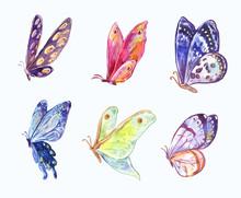 Watercolor Vector Butterflies In Three-quarter View