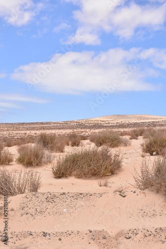 Dry Desert Landscape #292115883