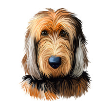 Otterhound Pet Having Long Fur...