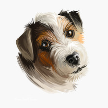 Parson Russell Terrier Dog Portrait Isolated On White. Digital Art Illustration Of Hand Drawn Dog For Web, T-shirt Print And Puppy Food Cover Design. Parson Jack Russell Terrier, Original Fox Terrier.