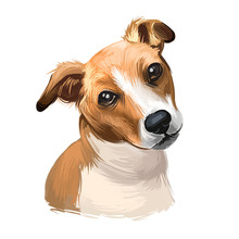 Plummer Terrier Dog Portrait Isolated On White. Digital Art Illustration Of Hand Drawn Dog For Web, T-shirt Print And Puppy Food Cover Design, Clipart. Plummer Terrier Is A Working Terrier.