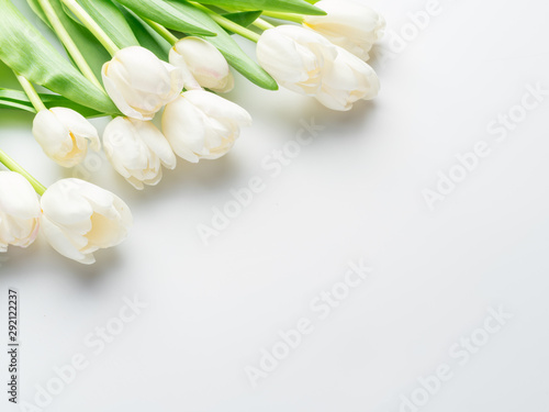 White tender tulips on white background. - 292122237