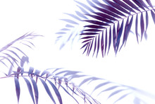Purple, Burgundy Palm Leaves On A White Background, Single Elements Isolated On White Background, Exotic Plants