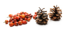 Pine Cones And Dog Rose Hips I...