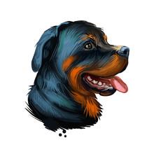 Rottweiler Dog Portrait Isolat...