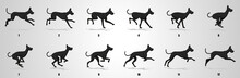 Great Dane Dog Run Cycle Anima...