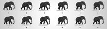 Elephant Run Cycle Animation S...