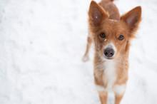 Dog And Snow