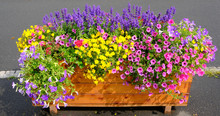 Colourful Flowers In A Wooden ...