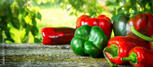 Garden Poster Hot chili peppers Red hot vegetable chili pepper and sweet pepper varieties of assorted on the table of old planks in the garden with copy space, concept of harvest and gardening