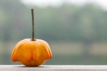 Orange Decorative Pumpkin. Gourd On Blurry Outdoor Background, Autumn  Concept With Copy Space.