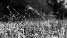 Bog Top Spider Web
