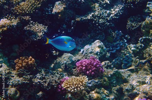 Photo Stands Coral reefs Colorful coral reef with exotic fishes of the Red Sea. Egypt.