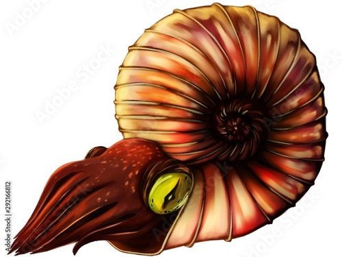 Illustration of ammonite in white background easy for use Wallpaper Mural