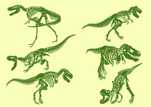 Graphical Color Set Of Tyrannosaurus Skeletons ,vector Illustration,pop Art