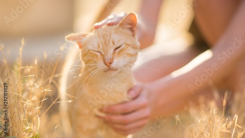 Photo  female hand stroking a cat on the head in a summer sunny garden