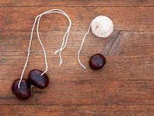 Conkers. Fruit Of The Horse Chestnut Tree, Aesculus Hippocastanum. With String For Traditional Game.
