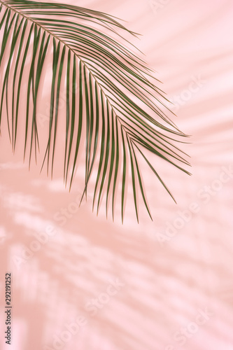 Summer beach day scene with tropical plams shadow on pink background. Minimal sunlight tropical arrangement. Wall mural