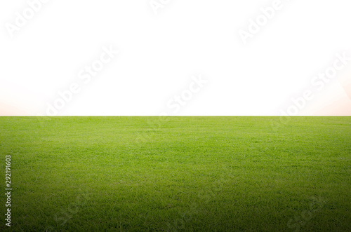 Fototapety, obrazy: Green grass field isolated on white background with clipping path.