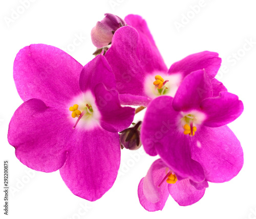 Violets beautiful flowers, background. - 292200875