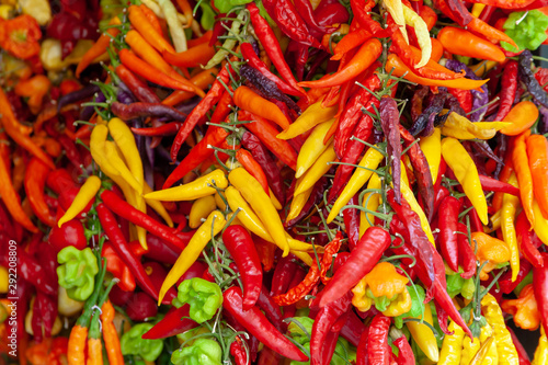 A bunch of different colorful chilies nicely arranged on a market to be sold Canvas Print