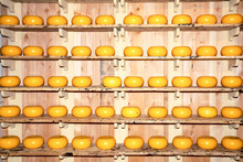 Dutch Cheese. Cheese Ripening On Shelves. Holland