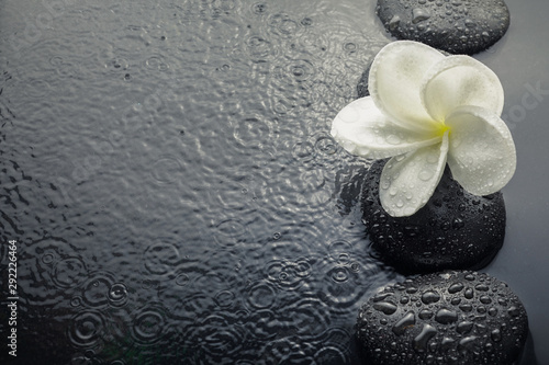 shiny zen stones with water drops and plumeria flower. Top view Canvas Print