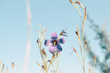 Dainty Purple Flower In Nature.