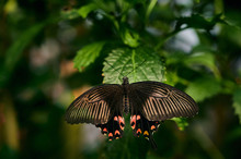 Fragile Butterfly On Green Pla...