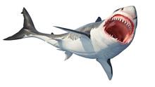 White Shark Marine Predator Bi...