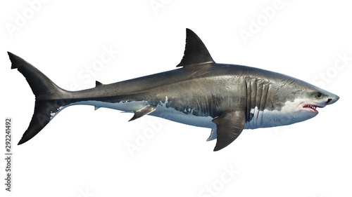 White shark marine predator big, side view. 3D rendering Canvas Print