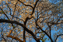Flowering Dogwood, Atlanta, Ge...