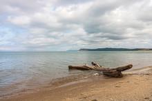 Driftwood On The Beach Of Sleeping Bear Bay