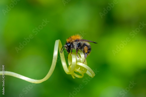 Garden Poster Butterfly Beautiful Bee macro in green nature - Stock Image