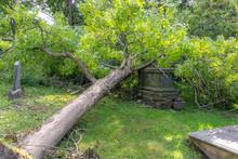 Tree Fallen On Grave