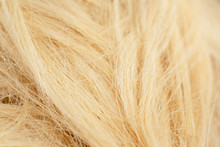 Sisal Fiber Texture Close Up