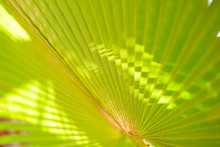 Green Corrugated Texture Of Th...