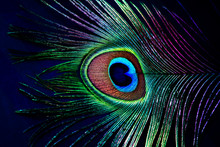 Abstract Background Of Peacock...