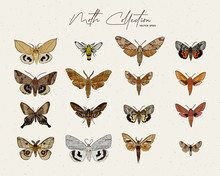 Moth Collection, Hand Draw Ske...