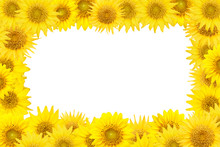 Yellow Sunflowers Frame Isolated On White Background