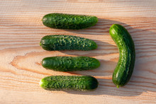 Freshly Picked Cucumbers On A Wooden Table. Close-up On A Sunny Day