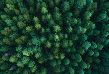 Aerial Panorama Of A Dense Nor...