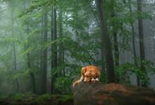 Dog In A Foggy Forest. Walk Wi...