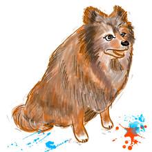 Pomeranian Spitz Red Brown Col...