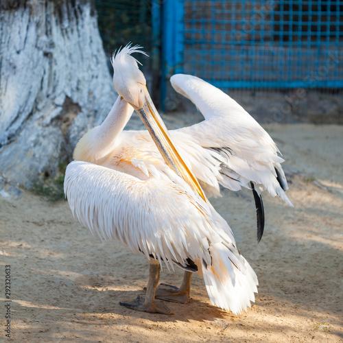 Aluminium Prints Camel Pelican at the zoo